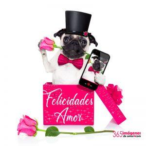 imágenes con rosas para feliz cumpleaños